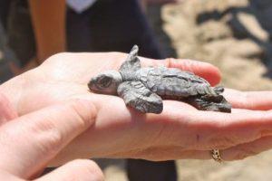 turtles-3-400x267